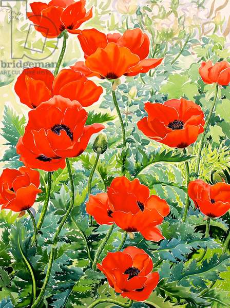 Garden Red Poppies (watercolour on paper)