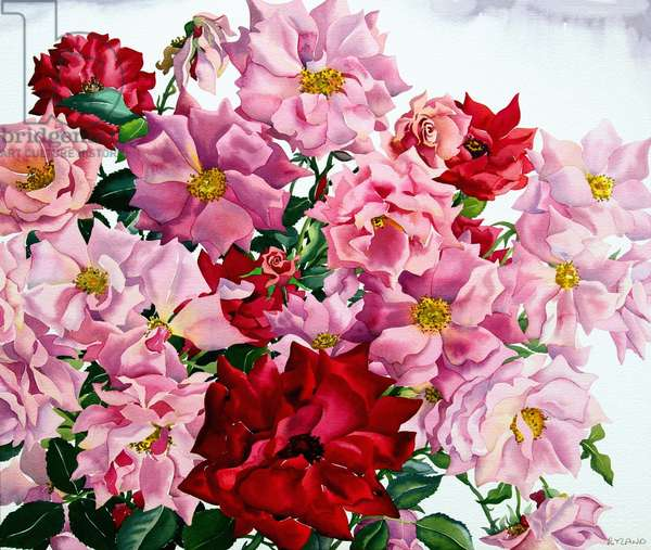 Red and Pink Roses, 2008 (w/c on paper)