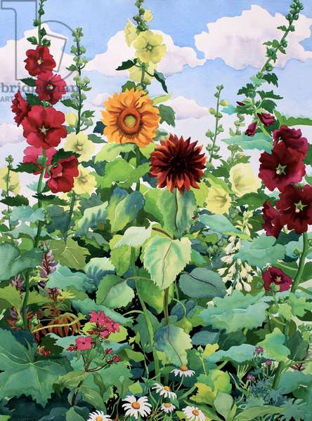 Hollyhocks and Sunflowers (watercolour on paper)