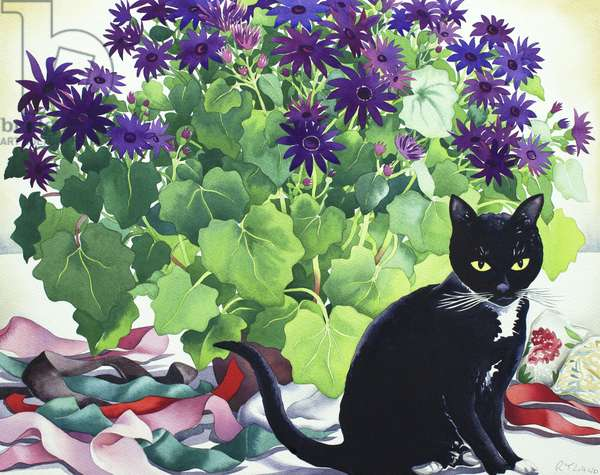 Senetti Plant and Cat