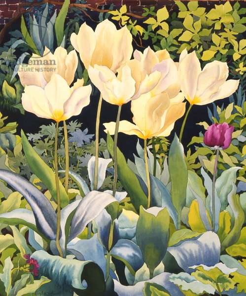 Pale Tulips (w/c on paper)
