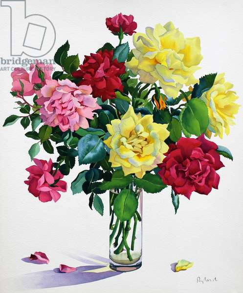 June Roses (watercolour on paper)