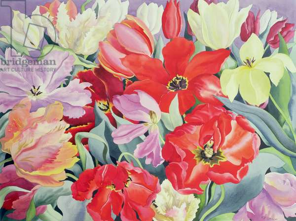 Massed Tulips, 2003 (w/c on paper)