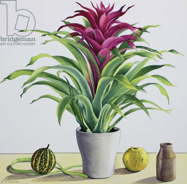 Still Life with Bromeliad (watercolour on paper)