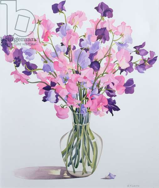 Sweetpeas, 2007 (w/c on paper)