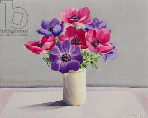 Anemones (watercolour on paper)