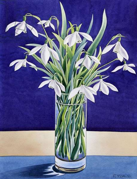 Snowdrops (watercolour on paper)