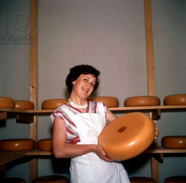 Dairy companies, cheese making: woman wearing a white apron proudly shows a large round cheese, The Netherlands