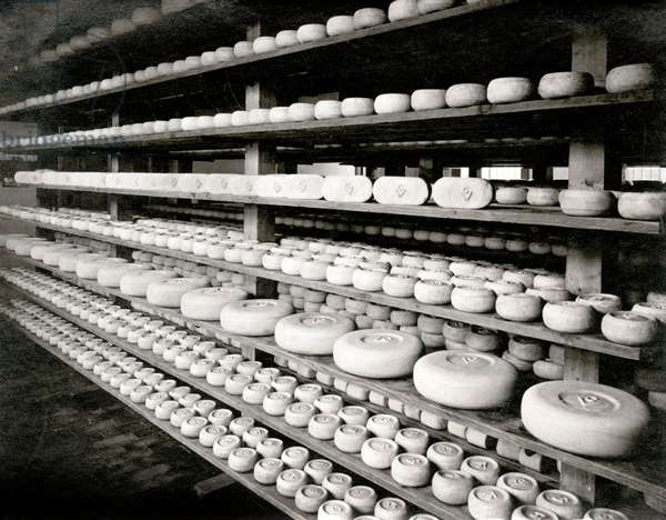 Cheese factory Oud Holland, a division of the Full Cream Cheese Union Amsterdam Bodegraven, The Netherlands, 1911.