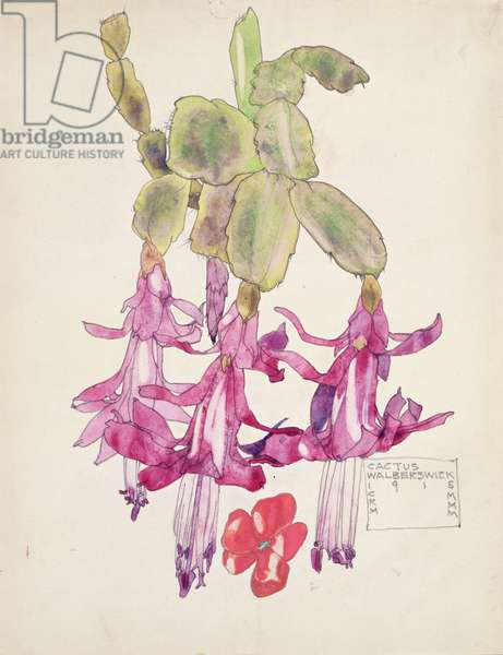Cactus Flower (w/c on paper)