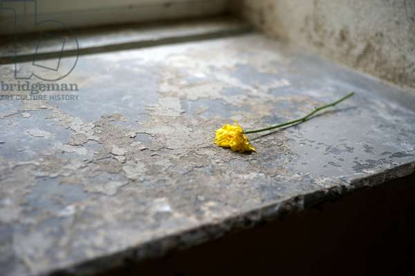 A flower placed as a memorial on the window sill of the former gas chamber at the Pirna-Sonnenstein Sanatorium, Germany, 2019 (photo)