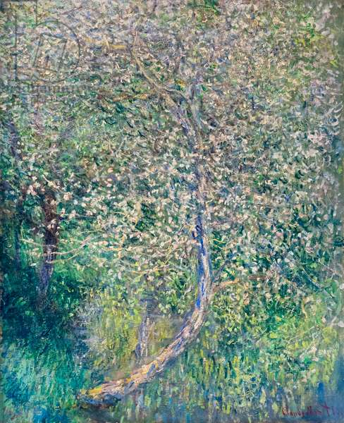 Apple trees in bloom at water's edge, 1880 (oil on canvas)