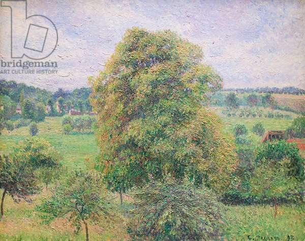 Big walnut tree at Eragny, 1893 (oil on canvas)