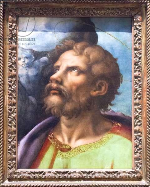 Head of a Saint (oil on panel)