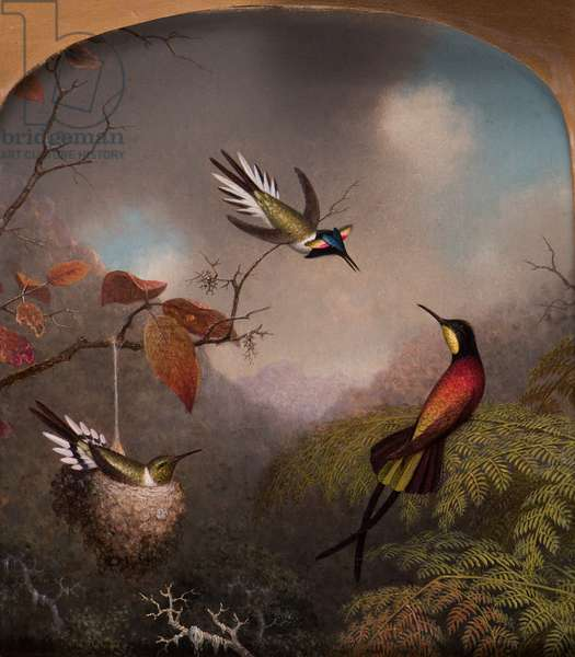Hummingbirds: Two 'Sungems' and a 'Crimson Topaz', 1866 (oil on canvas)