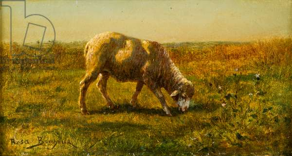 Sheep, date unknown (oil on canvas)