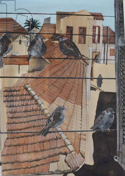 Sparrows Morning Mehmet Ali Street, 2013 (w/c and ink on paper)