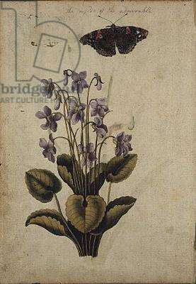 Violets: Viola odorata, and the Underside of a Red Admiral Butterfly, c.1568, by J. Le Moyne de Morgues (c.1530-88)