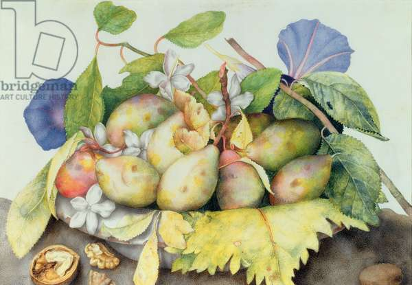 Still life with Plums, Walnuts and Jasmine (w/c on vellum)
