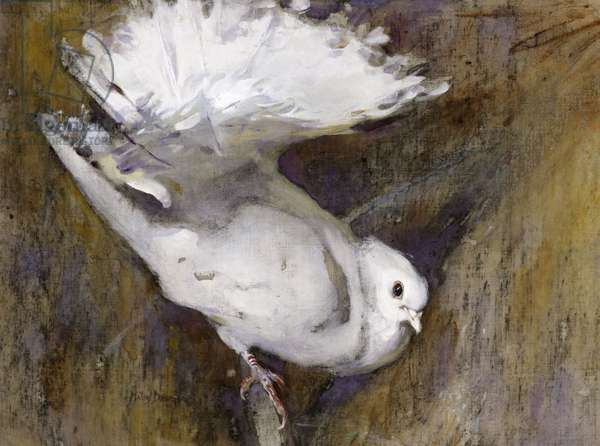 White Fantail, c.1920 (w/c on paper)