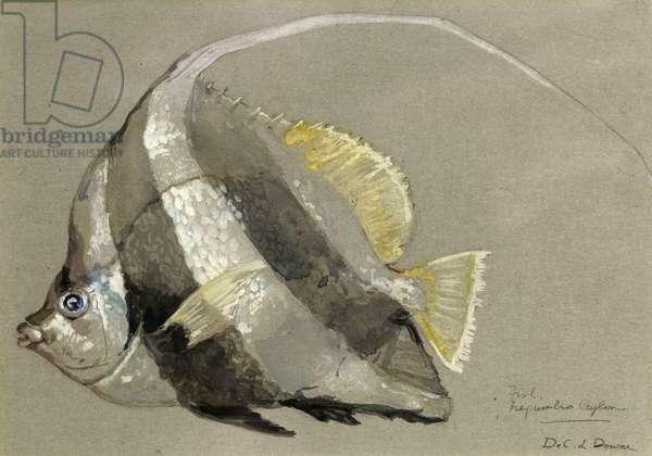 Fish -– Negumbo Ceylon, c.1920 (w/c on paper)