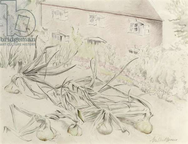 Onions in the Garden of the Artist's House at Twyford, near Shaftesbury, c.1940 (w/c on paper)