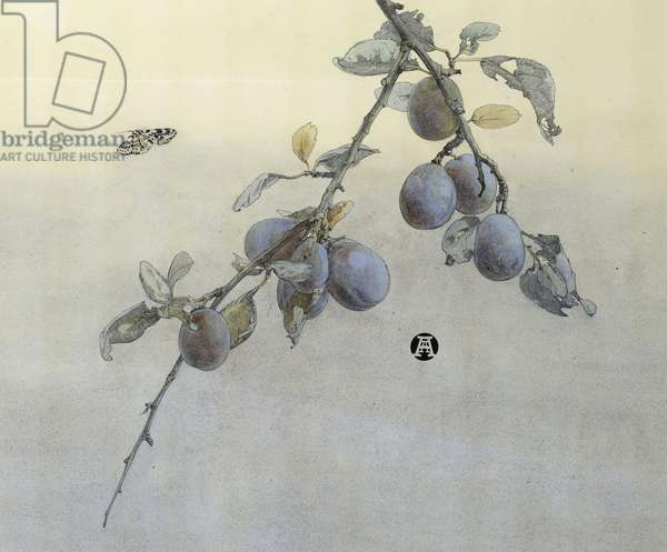 Leopard Moth and Plums, c.1945 (w/c on paper)