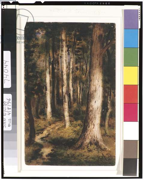 Forest Scene, 1901-15 (w/c on paper)