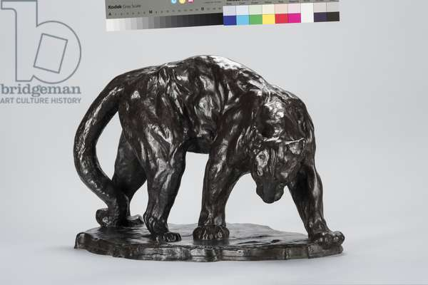 Large Puma Smelling Ox Track, 1908 (bronze)