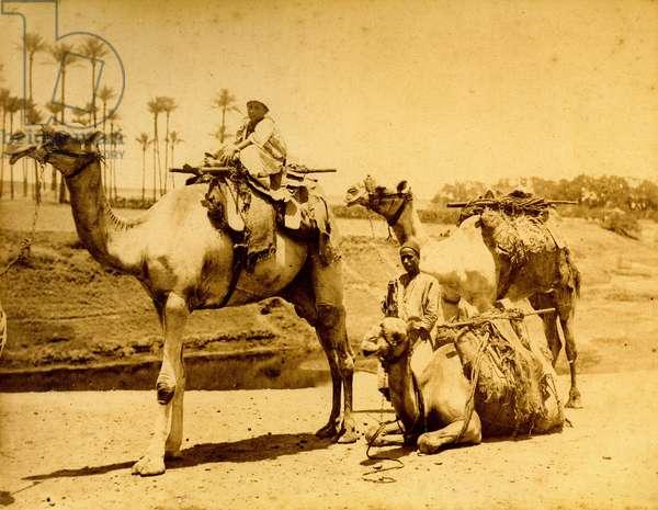 Three camels, Egypt, c.1880 (albumen print)