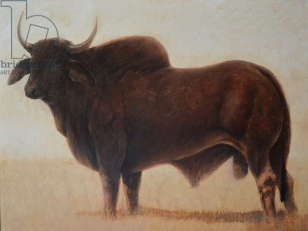 Brahmin Bull