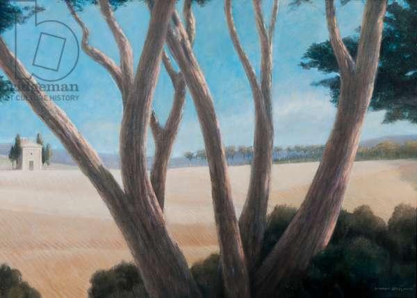 Pines near Pienza, 2012 (acrylic on canvas)