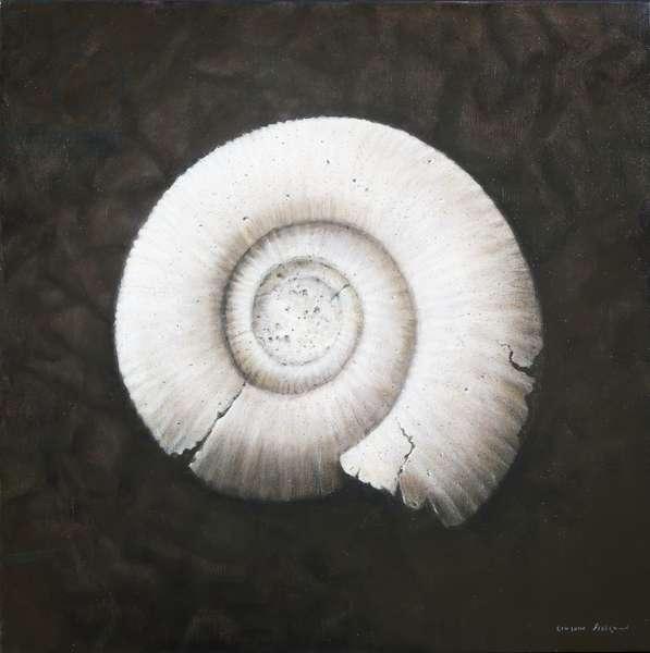 Amononite, 2012 (acrylic on canvas)