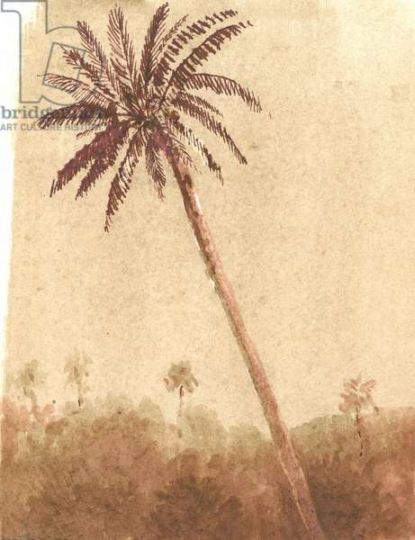 Palm Tree, 2015 (w/c on paper)