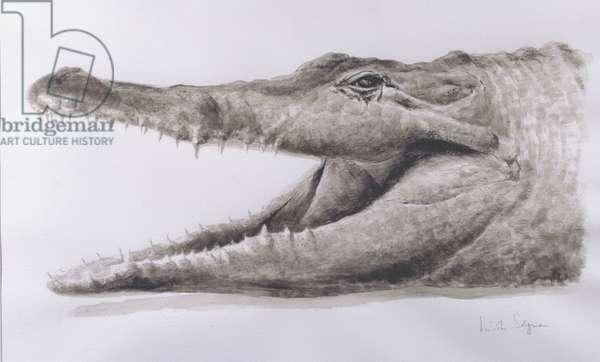 Crocodile, 2005 (acrylic)