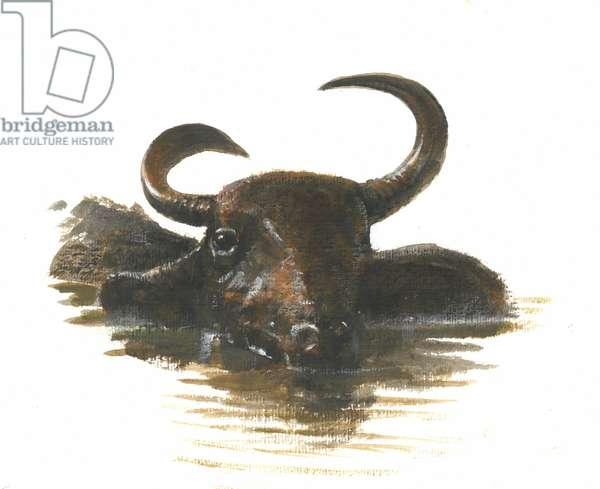 Water Buffalo, 2015 (w/c on paper)