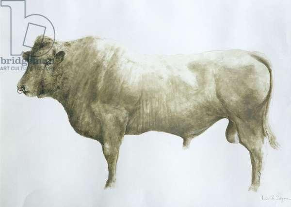 Islay Bull, 2004 (acrylic on canvas)