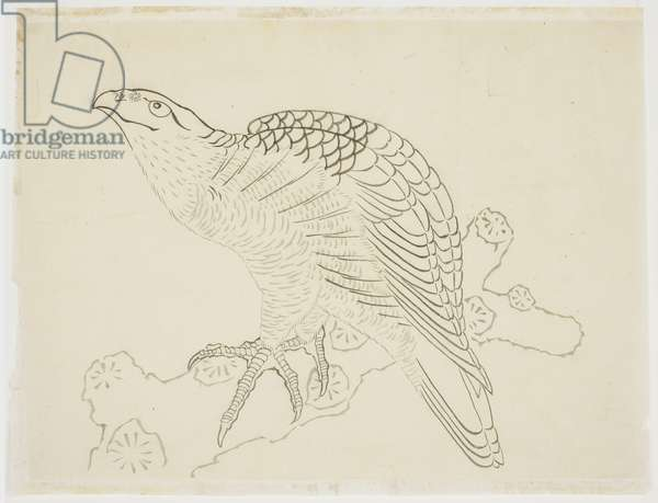 Hawk on a Branch (study), 1815-1849 (ink on paper)