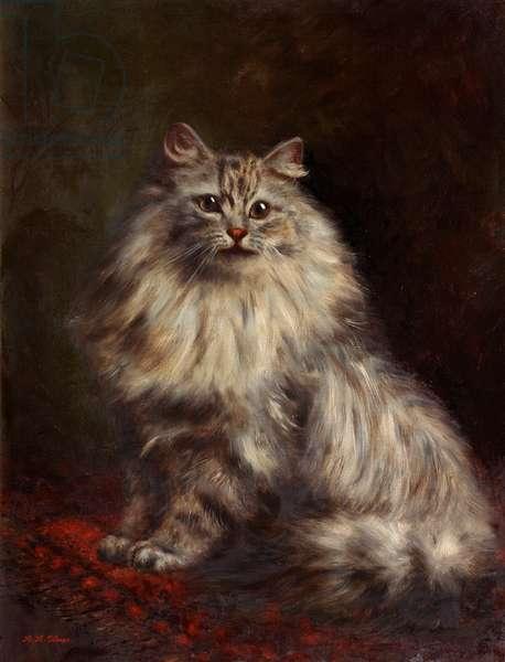 Persian Cat, c.1908-20 (oil on canvas)