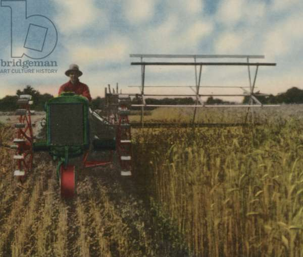 Oliver Hart-Parr Row Crop Tractor Equipped With A Harvester, c.1930 (colour litho)