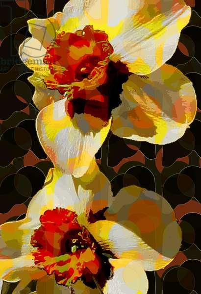 Daffodil (digital)