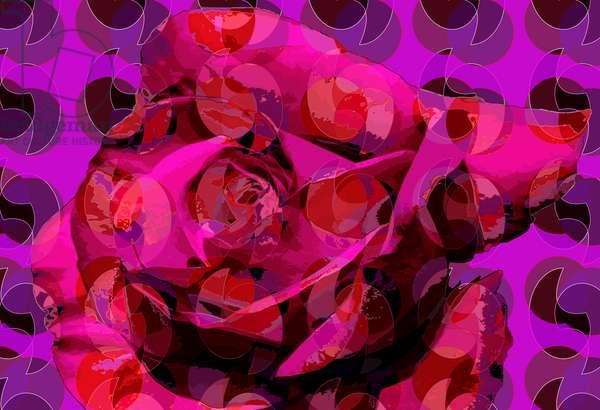 Rose (digital)