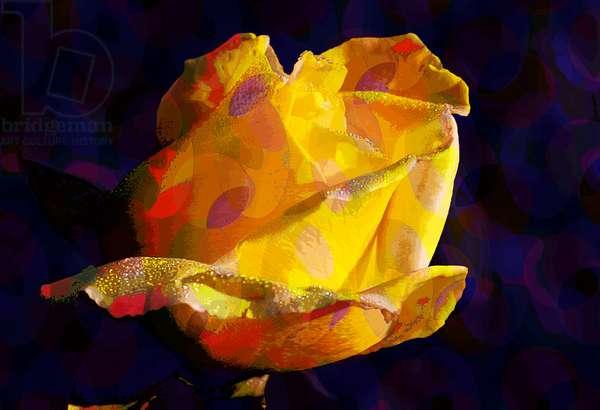 Yellow Rose (digital)