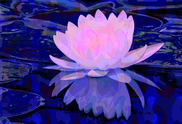 Pink Water Lily (digital)
