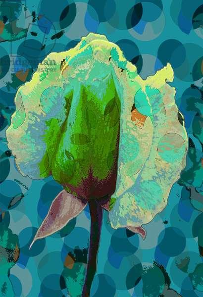 Tea Rose 2 (digital)