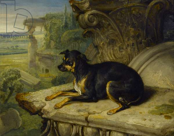 'Fanny', a Favourite Dog, 1822 (oil on panel)