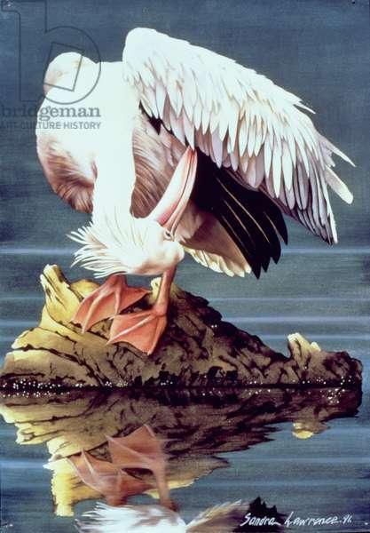 Pelican, 1991 (w/c on paper)