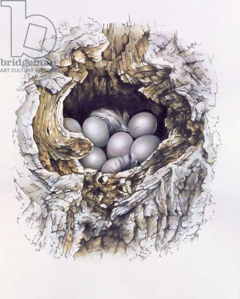 Bubo Bubo (Barn Owl), 2001 (gouache and pencil on paper)