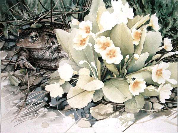 Toad with Primrose, 1989 (w/c on paper0
