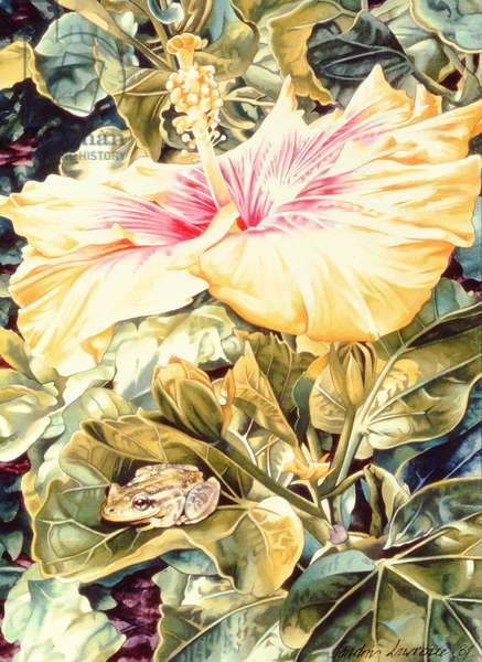Tree Frog and White, Yellow and Pink Hibiscus, 1989 (gouache on paper)